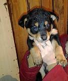 Ищем милым щеночкам дом и любящую семью Екатеринбург